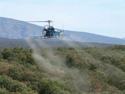 Traitement avec le Bt par hélicoptère contre Thaumetopoea processionea. © Jean-Claude Martin, DR