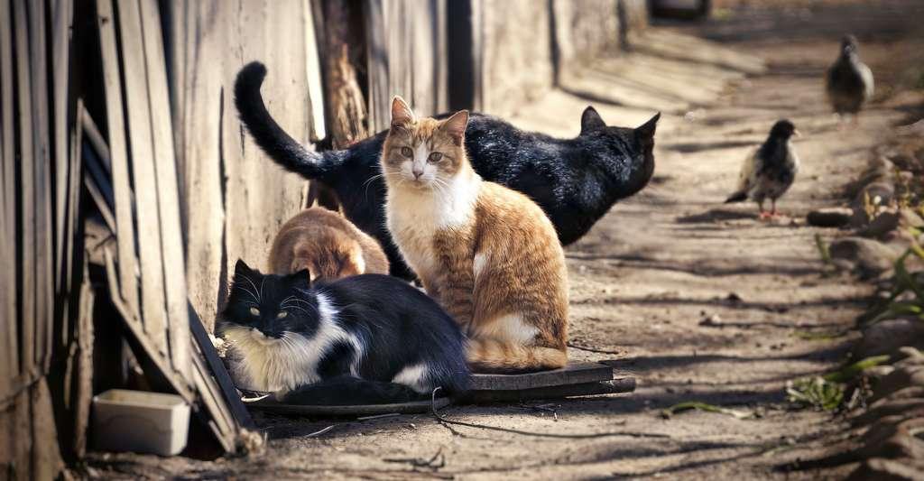 La stérilisation des chats errants tient une place importante dans la lutte pour le bien-être animal. © Laura Pashkevich, Adobe Stock