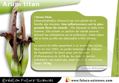 La biodiversité englobe toutes les espèces vivantes, plantes ou animaux. © Futura-Sciences