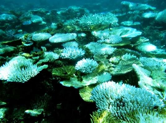Au nord de l'île de Sumatra, en Indonésie, le corail n'a pas résisté au réchauffement de la température de l'eau de 2010, ce qui a provoqué le phénomène de blanchiment. © UNSW