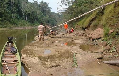 Expédition Fitzcarrald 2005, un des gisements de fossiles du Rio Mapuya. © IRD/ P. Baby Reproduction et utilisation interdites