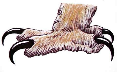 Pattes de chouette. © Reproduction et utilisation interdites