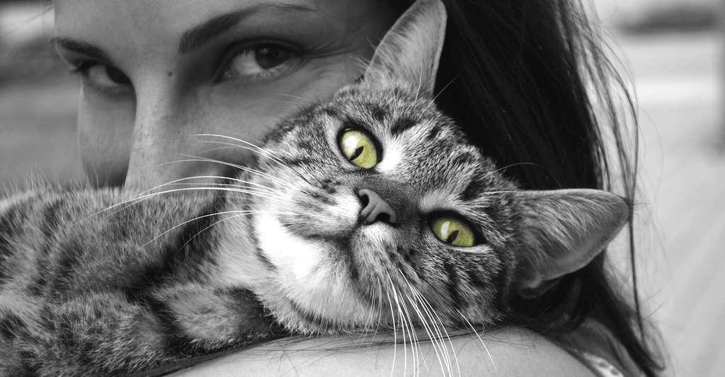 Les chats se révèlent à la fois affectueux et indépendants. Un caractère qui doit correspondre au vôtre… © MartinaPzienza, Pixabay, DP