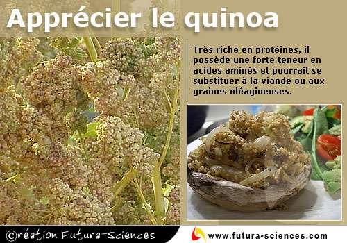 Découvrir le quinoa