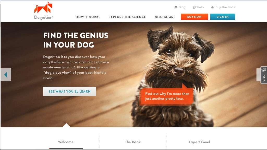 Le site Internet Dognition a été mis en ligne ce mardi 5 février 2013. Cette application Web permet à n'importe quel propriétaire d'un chien d'évaluer son intelligence. Les données sont récoltées par l'équipe du chercheur Brian Hare, de la Duke University. Elles permettront aux chercheurs d'approfondir leurs recherches sur le comportement du chien. © www.dogcognition.com
