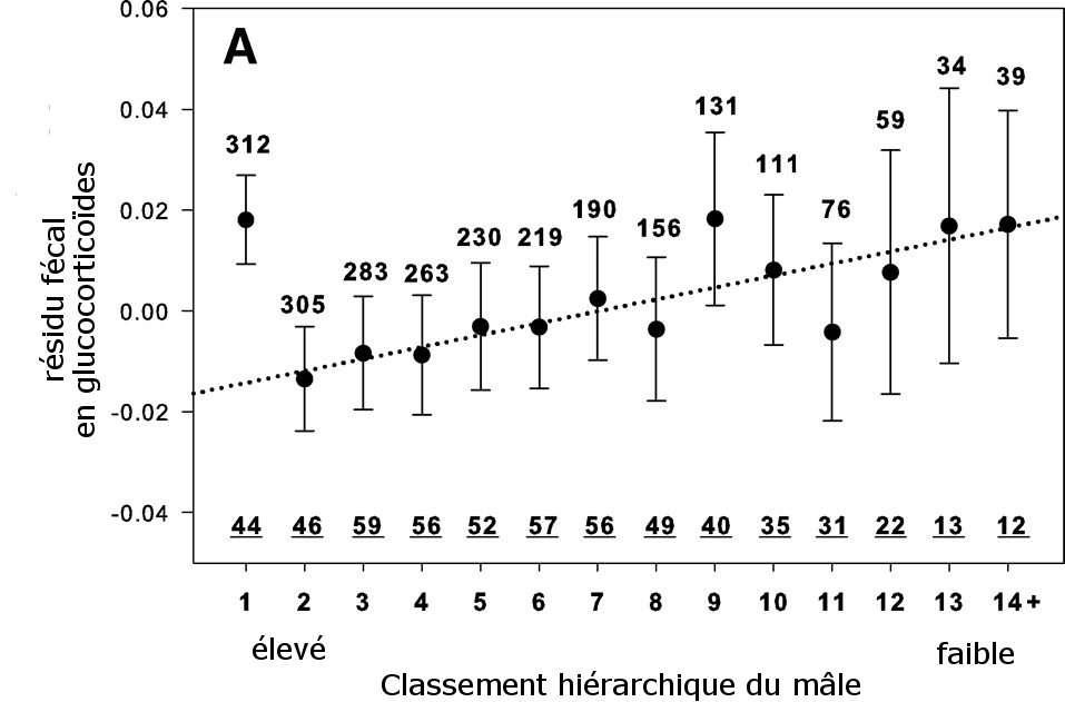 Indicateur de la quantité de glucocorticoïdes présente dans les fèces des mâles babouins. On voit que le mâle alpha (1) a une quantité de résidus similaire à celle de mâles en bas de l'échelle (9 à 14). Les nombres soulignés indiquent le nombre de mâles étudiés. Les nombres au-dessus des points représentent le nombre de mois d'étude. © Guesquière et al., 2011