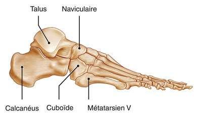 Profil d'un pied humain. © DR