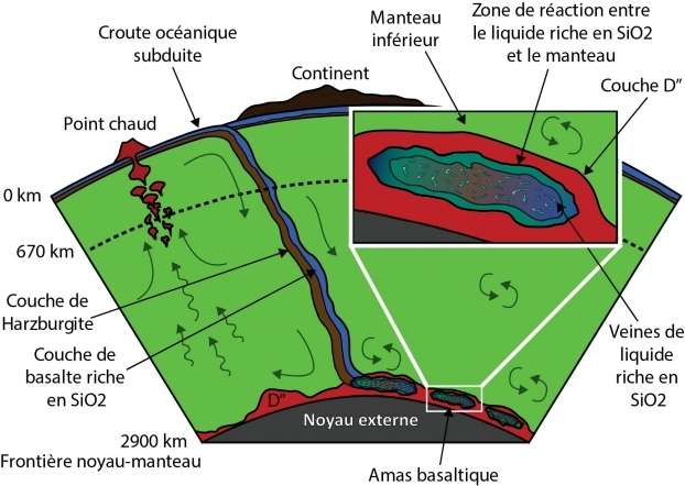 En haut à gauche de ce schéma, la croûte océanique plonge dans le manteau et atteint la partie externe du noyau, au niveau de la couche D'', une région où se déroulent des phénomènes encore mal connus. Des fragments de plaques océaniques viendraient y fondre, relâchant des liquides très riches en silice (SiO2). © D. Andrault et al. 2014