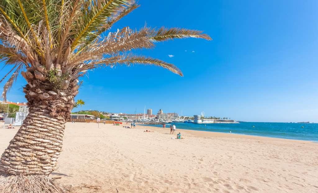 Une tortue Caretta caretta est venue pondre sur une plage varoise. © Unclesam, Adobe Stock