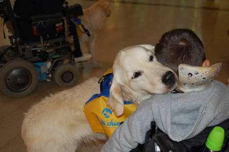 Le chien éprouve un réel attachement à l'Homme. © Handi'Chiens, tous droits réservés