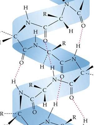 Molécule de kératine.