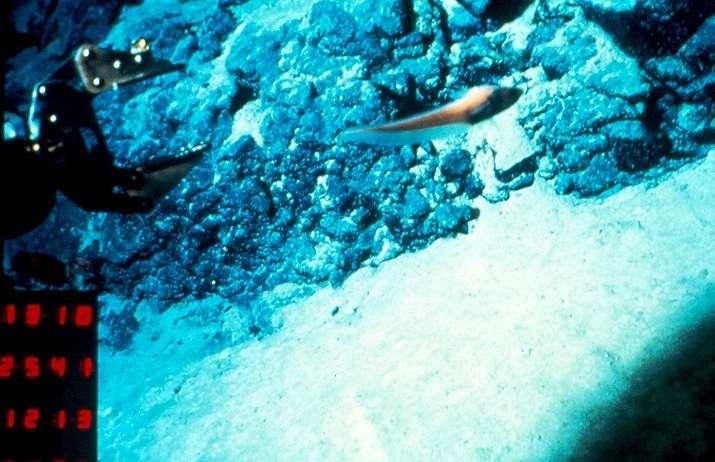 Ces photos proviennent des campagnes Galinaute I et II, du Nautile. À gauche : un pilote s'apprête à prélever un échantillon de péridotite (plongées 14). © Jacques Kornprobst, Ifremer. À droite : la pince a saisi un énorme bloc de granitoïde (plongée 21). © Véronique Gardien, Ifremer