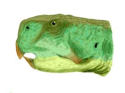 Herbivore, Psittacosaurus lujiatunensis mesurait jusqu'à deux mètres et se déplaçait sur deux pattes. Pour les experts, les Psittacosaurus seraient les parents des dinosaures à cornes tels les triceratops, les cornes et la collerette en moins. © Nobu Tamura, Wikimedia Commons, cc by nc sa 3.0
