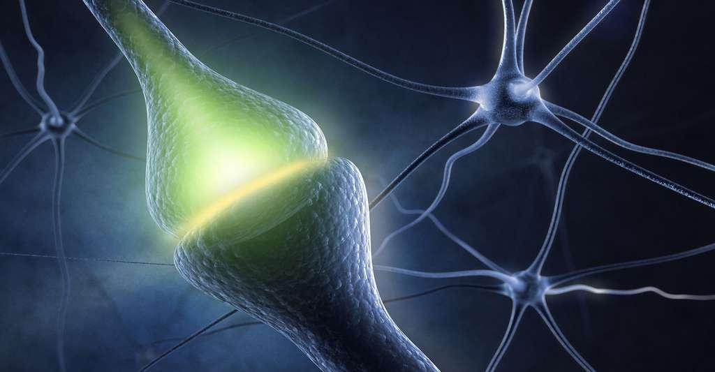 Le synapse est une zone fonctionnelle entre deux neurones. © Sashkin, S hutterstock