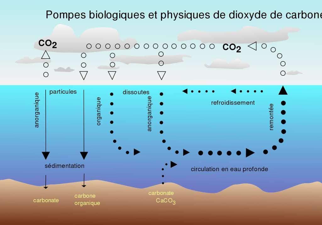 Les échanges de carbone entre mers et atmosphère sont importants, peut-on accélérer le processus de captation ? © Isaac Sanolvacov, Wikimedia commons CC 3.0