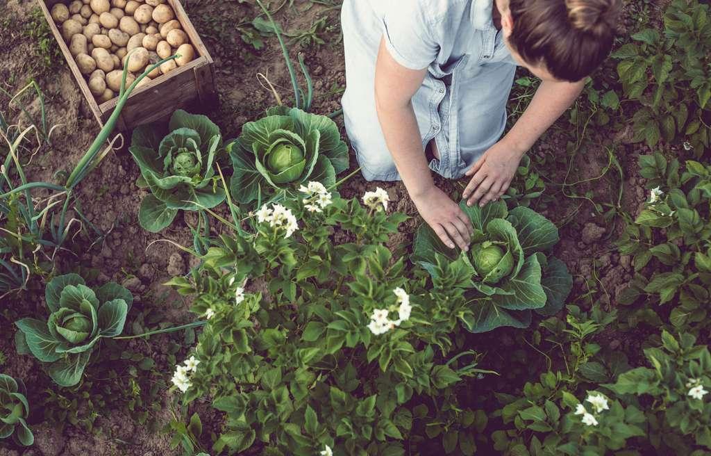 Dans cette consultation citoyenne « Inventons le monde d'après », l'écologie arrive en tête des revendications des Français. © Sanjeri, IStock.com