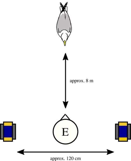 Un schéma illustrant l'expérience mis en place par la comportementaliste animale. © Goumas et al.
