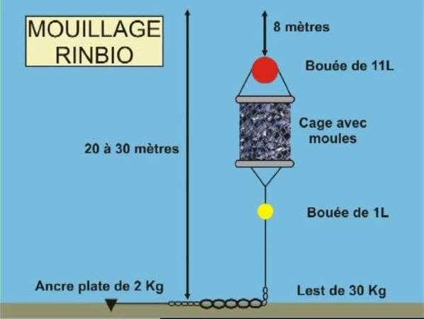 Descriptif d'un mouillage du réseau Rinbio (réseaux indicateurs biologiques). Aucun élément n'est visible hors de l'eau pour éviter tout problème avec des activités nautiques s'opérant en surface. Les poches sont donc uniquement localisées par des coordonnées GPS. De plus, les dispositifs sont moins sensibles aux vagues à cette profondeur. © Ifremer