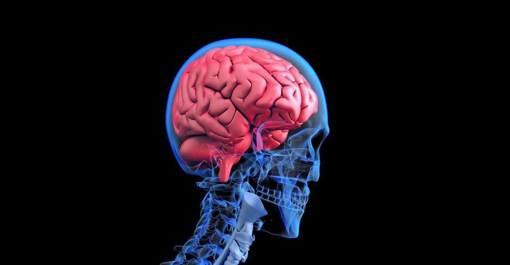 Le cerveau commande t-il ? © Gerald, Pixabay, DP