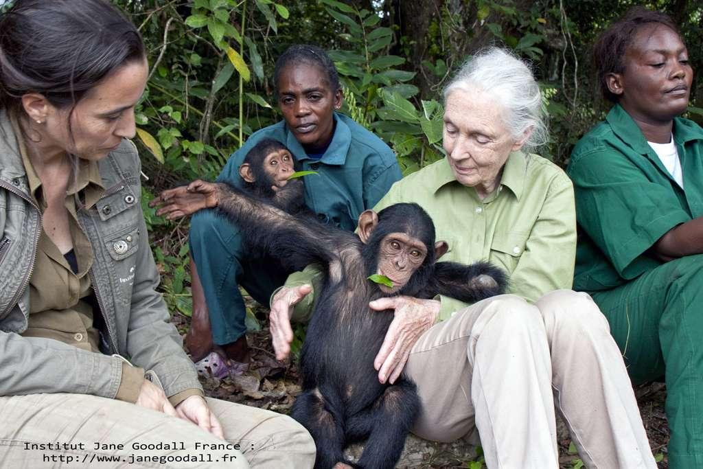 Jane Goodall et des équipes du sanctuaire de Tchimpounga avec Anzac, jeune chimpanzé orphelin au centre de réhabilitation de l'institut Jane Goodall au Congo-Brazaville. © Institut Jane Goodall