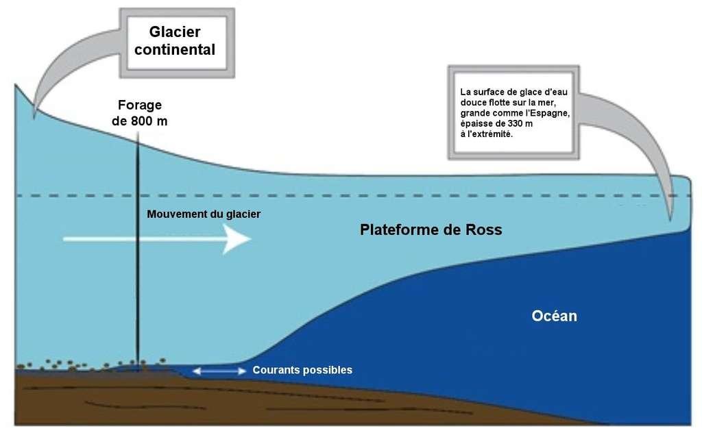 Schéma de la zone de forage. Le puits atteint une zone d'eau libre de faible épaisseur à l'endroit où le glacier de Ross, dans son mouvement vers le large, se sépare du sol. © Rachel Xidis, NIU