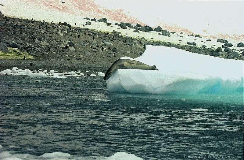 En phase de plongée. © Jerzy Strzelecki, GNU FDL Version 1.2