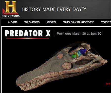 Le crâne de Predator X, montré sur une vidéo de la chaîne History.Com.