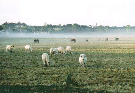 © Parc Interrégional du Marais Poitevin - Tous droits de reproduction interdit