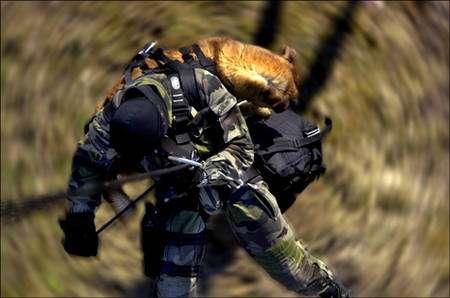 Chien harnaché sur le dos d'un membre du GIGN qui descend en rappel d'un hélicoptère. © Sirpa Gendarmerie
