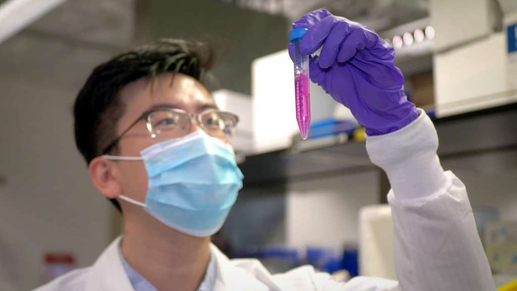 Une solution à concentration de 5 mg par litre suffit à éliminer plus de 90 % de l'activité virale. © Weiwei Gao, UC San Diego Jacobs School of Engineering