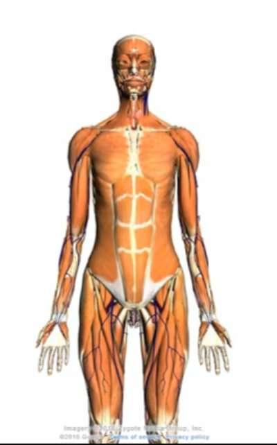 Le corps humain est fait de tissus, composés de cellules. © Google