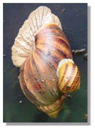 Différences entre deux espèces © Photo Philippe Mespoulhé