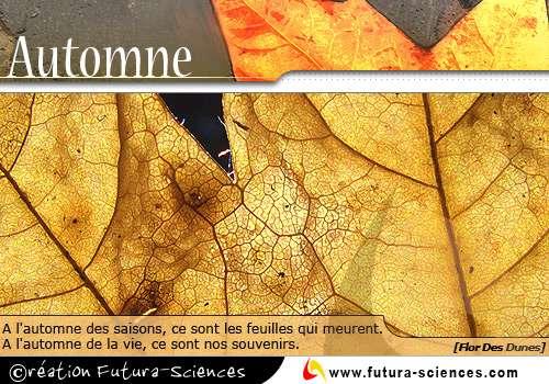 L'automne des saisons
