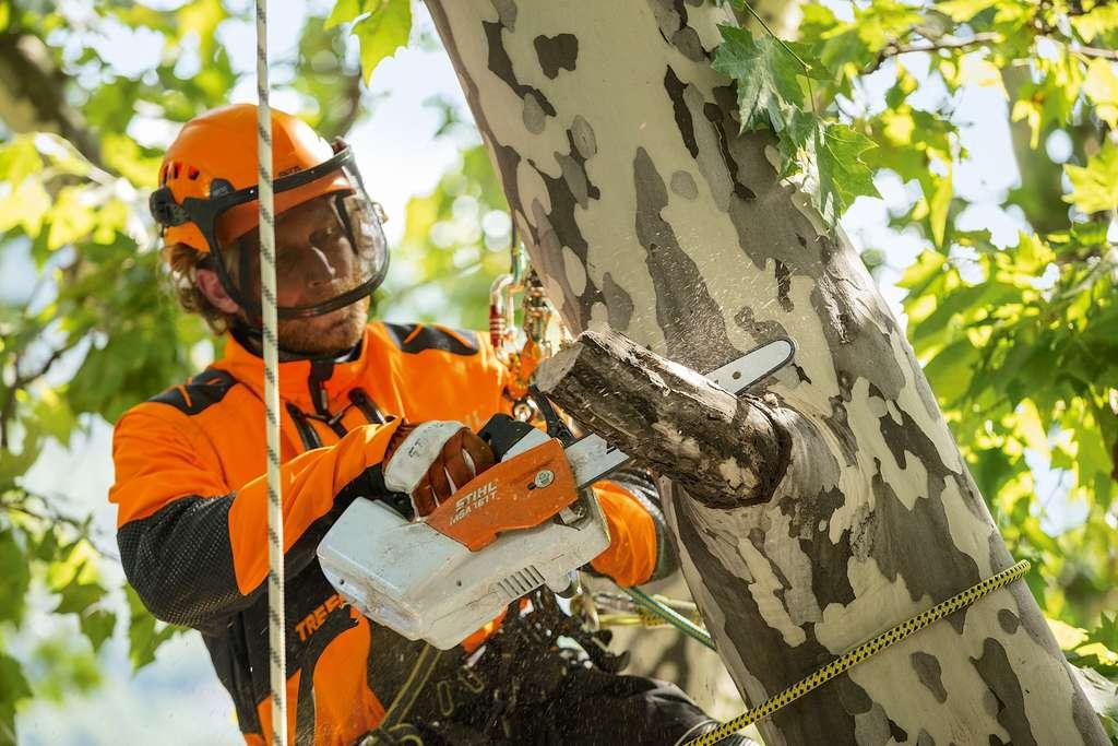 L'élagage est un exercice risqué qui requiert un équipement adapté et du savoir-faire, pas seulement dans le maniement de la tronçonneuse. © Stihl