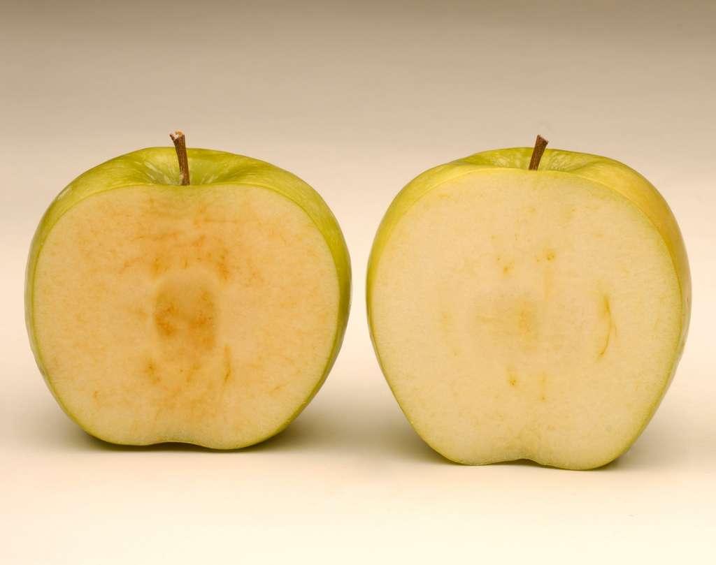 La pomme Arctic (à droite) ne brunit pas une fois coupée. © Arctic Apples, Facebook