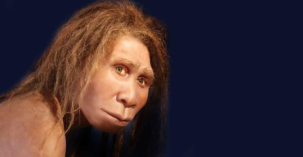 Reconstitution de Homo georgicus présentée au musée de Préhistoire de Quinson, Alpes-de-Haute-Provence, France. © 120, CC by-sa 3.0