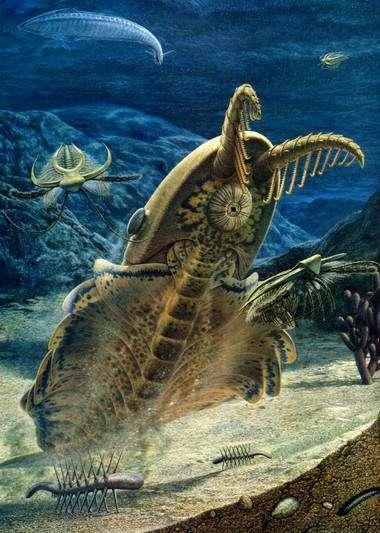 Un superprédateur des mers du Cambrien, Anomalocaris. Cliquez pour agrandir.