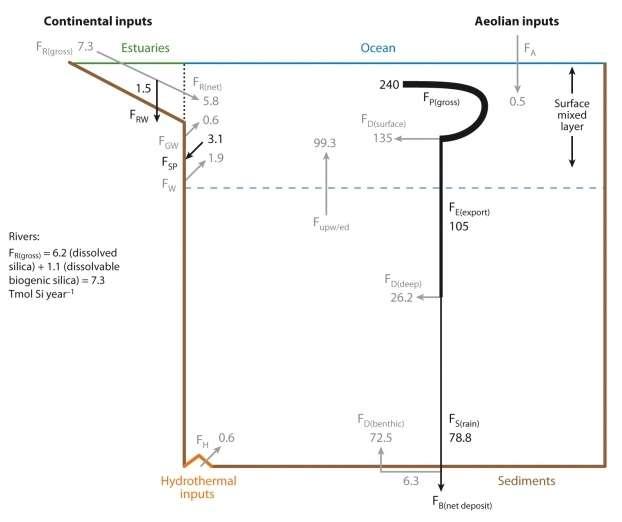 Cycle biogéochimique du silicium dans l'océan mondial à l'état d'équilibre. La ligne pointillée représente la limite entre les estuaires et l'océan, les flèches grises les flux d'acide silicique et les flèches noires les flux de particules de silice biogénique. Tous les flux sont exprimés en téramoles (1012 moles) de silicium par an. Abréviations : FR(gross)/(net), apports fluviaux bruts/nets ; FRW, dépôts de silice biogénique dans les estuaires ; FGW, flux des résurgences ; FA, entrées éoliennes ; FH, entrées hydrothermales ; FW, entrées par dissolution des minéraux déposés sur les marges ; FP(gross), production brute de silice biogénique (diatomées) ; FD(surface), flux d'acide silicique recyclé dans le réservoir de surface ; FE(exportation), flux de silice biogénique exportée vers le réservoir profond ; FD(profond), flux d'acide silicique recyclé dans les eaux profondes ; FD(benthique), flux d'acide silicique recyclé à l'interface eau-sédiment ; FS(rain), flux de silice biogénique en sédimentation et atteignant l'interface eau-sédiment ; Fupw/ed, flux d'acide silicique transféré du réservoir profond à la couche de surface (upwelling, diffusion turbulente) ; FB(netdeposit), dépôt net de silice biogénique dans les sédiments côtiers et abyssaux ; FSP, puits net de silice biogénique dû aux éponges des plateaux continentaux. © Insu