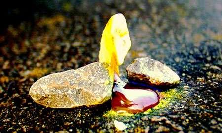 Soufre qui fond. © J. Hemmerlein, Wikipedia