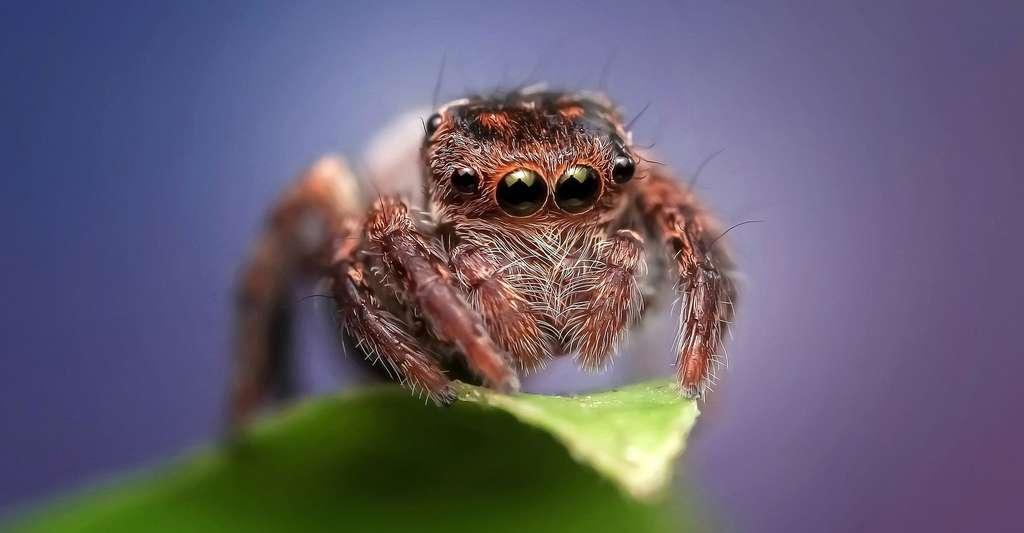 Les poils d'araignée. © ROverhate, Pixabay, DP