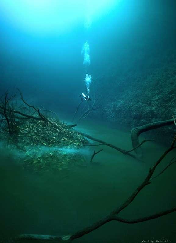 Une étrange « rivière » serpente sous les eaux du cénote Angelita. © Anatoly Beloshchin