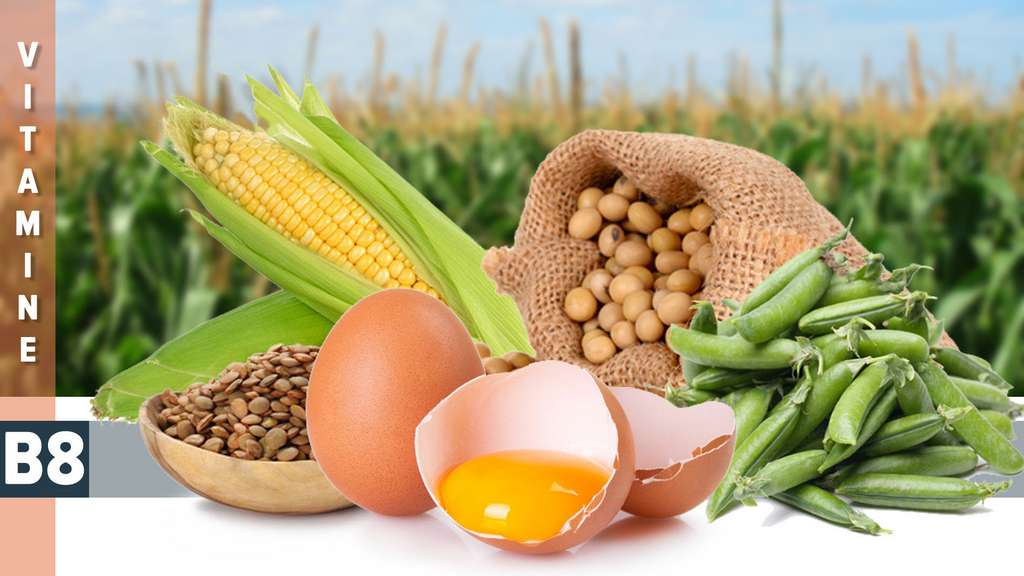 La vitamine B8 participe à plusieurs voies métaboliques