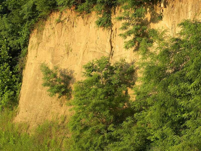 Le loess, visible ici, est une roche sédimentaire détritique et donc riche en matière organique. Elle est fertile et était appréciée des agriculteurs du Néolithique. Ceux qui pouvaient cultiver sur ces terrains jouissaient d'un statut social particulier. © Wilson44691, Wikipédia, DP