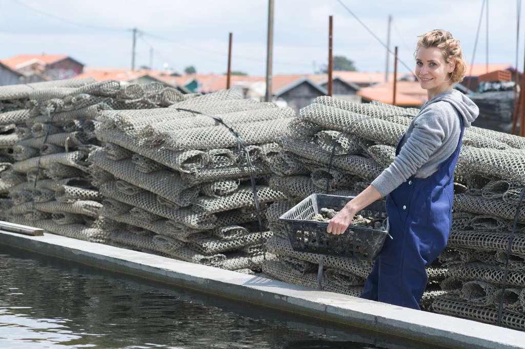 Parmi les spécialisations possible de l'aquaculteur, l'ostréiculture, c'est-à-dire, l'élevage des huîtres. © auremar, Fotolia.