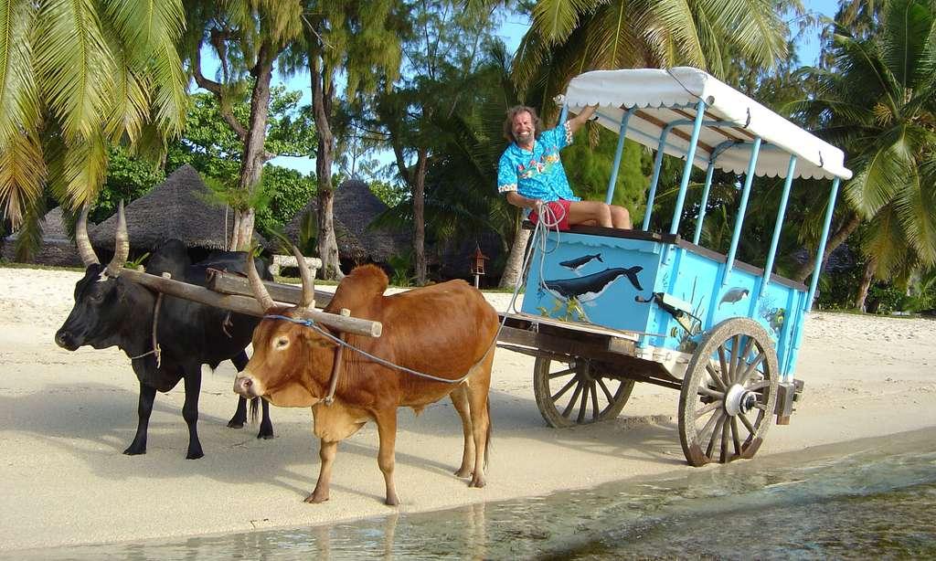 Antoine sur la charrette à zébus, île Sainte-Marie de Madagascar
