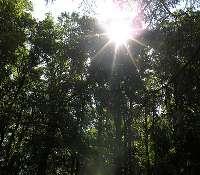 La biodiversité, réseau à préserver. © mypouss, Flickr CC