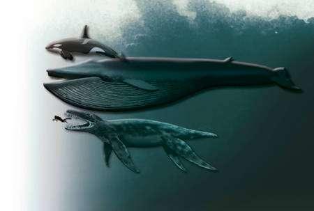 Figure 3. Une comparaison entre un orque, une baleine et le pliosaure retrouvé. Notez la taille du plongeur. Crédit : Tor Sponga, BT