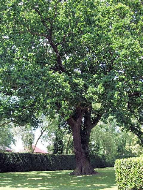 Comment un arbre à longue durée de vie s'adapte-t-il aux évolutions de son environnement ? © Jim Linwood, Flickr, CC by 2.0