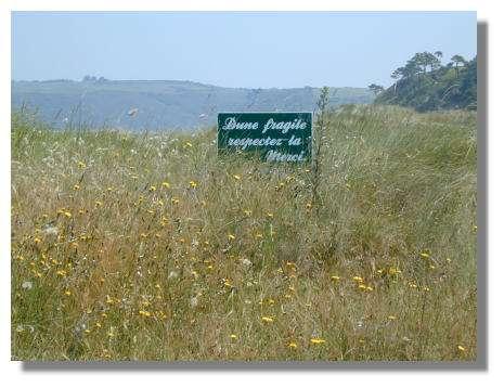 Les dunes de Bon Abri, près de la Pointe des Guettes, ont un grand intérêt floristique. © Photo : Emanuel Ciccluna