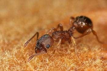 Découvrez le monde étonnant des fourmis. © JR Guillaumin / Flickr - Licence Creative Common (by-nc-sa 2.0)